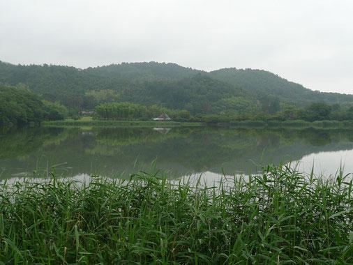 20100620 広沢池