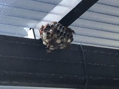 カーポートの下に作った蜂の巣