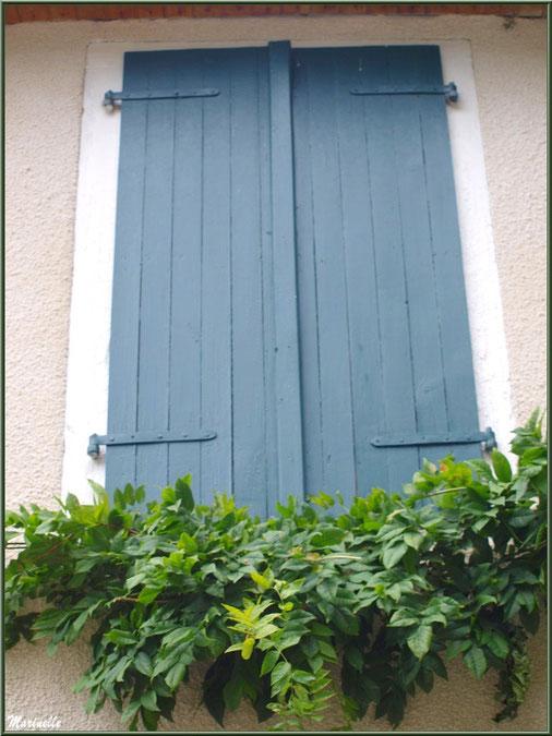 Fenêtre aux volets bleus et treille dans le village d'Aas, Vallée d'Ossau (64)