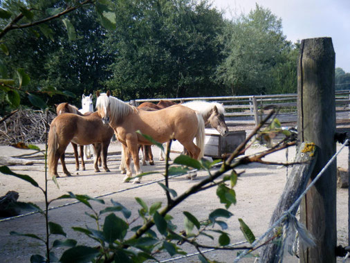 Pferde erblicken den Besucher