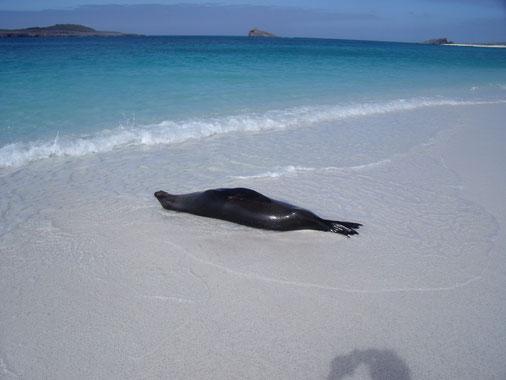 Ihre Traumreise zu den Galápagos Inseln mit ECUADORline