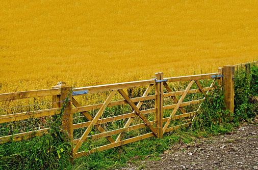 Fast 50% der Anbauflächen werden für Tierfutter benötigt!