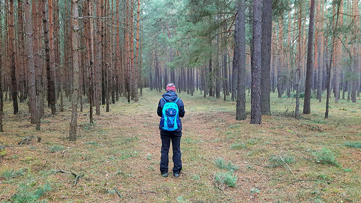 Alles um uns herum ist Wald!