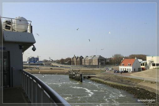 Bei der Überfahrt von Den Helder nach Texel folgten uns die Möven...