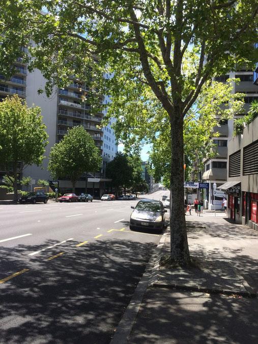 Bienvenue à Auckland!