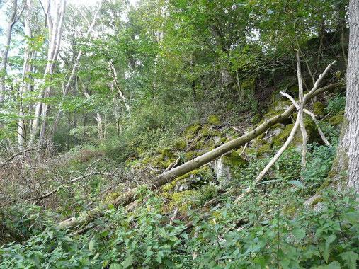 Urwald mit Basalt-Blockschutt und abgestorbenen Ulmen