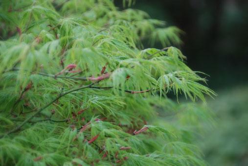 Ein besonderes Augenmerk gilt in der fernöstlichen Gartenkunst auch heute noch der Balance natürlicher Gegensätze - Yin und Yang