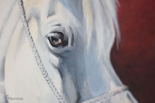 Happy horse eyes : The eye reflects the soul of the horse!