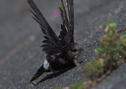 「翼、問題なし、その他異常なし」と元気を取り戻した様子