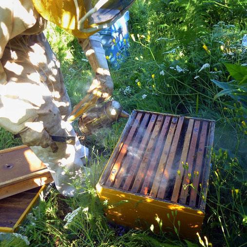 Panoplie d'apiculteur Bastien au rucher en Cevennes © Nadine Vilas