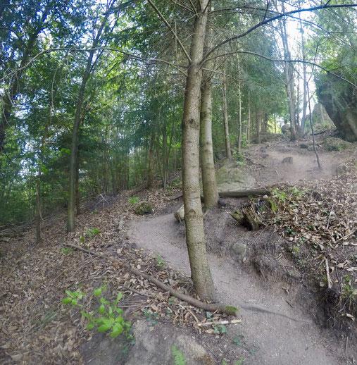 Schwarzwälder Genießerpfad Durbacher Weitblick