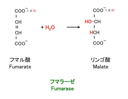 フマル酸の水和
