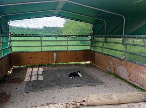 Die einzige, die sich in letzter Zeit auf dem Softbett ablegt - die Pferde liegen lieber im Sand.