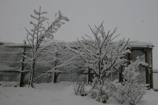 Gehege verschwindet unter dem Schnee 3.08