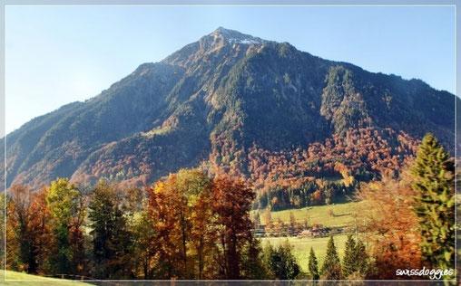 Vorbei am Niesen im Herbstkleid fuhren wir - sehr spontan gestartet ;-) - Richtung Wallis.