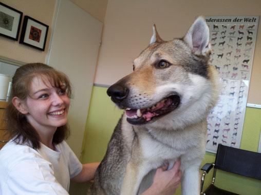 """unsere ehem. TFA Nicole Herbote (inzwischen im Team der Tierklinik vom Bökelberg) und Patient Wolfshund """"Lupus"""""""