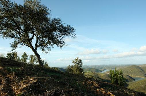 - uitzicht op het meer vanaf de heuvel met links de steeneik -