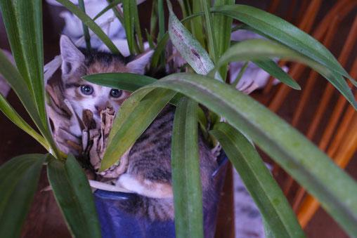 2010年5月ハ~チャンはこんなふうにして初めて我が家にやって来ました。ノラ猫のお母さんに取り残されて、仕方なく飼うことになりました。