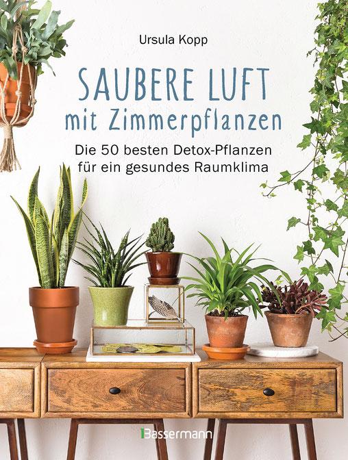 Luftbefeuchter Pflanzen - Den größten Teil unserer Lebenszeit verbringen wir abseits der Natur in geschlossenen Räumen. Dabei atmet ein Mensch täglich zehn bis zwanzig Kubikmeter Luft ein.