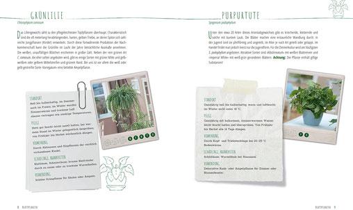 Luftbefeuchter Pflanzen - Am einfachsten und gesündesten wirken Zimmerpflanzen. Sie sehen nicht nur schön aus, eine Reihe von ihnen verbessert auch das Raumklima, da sie Schadstoffe absorbieren und gesundheitliche Schäden aufnehmen.