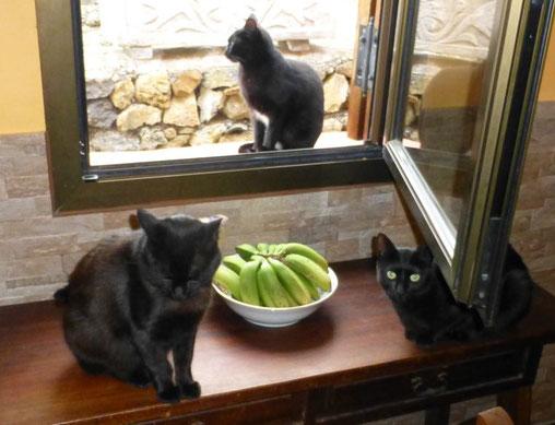 Moringa, der Wunderbaum für Katzen zur Stärkung des Immunsystems
