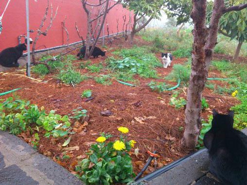 Thymian für Katzen gegen Bandwürmer