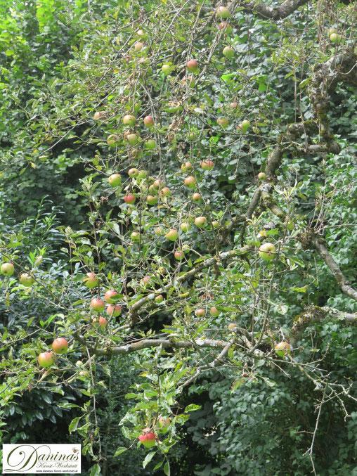 Heimische Obstbäume wie Apfelbaum sorgen für den Erhalt der Artenvielfalt