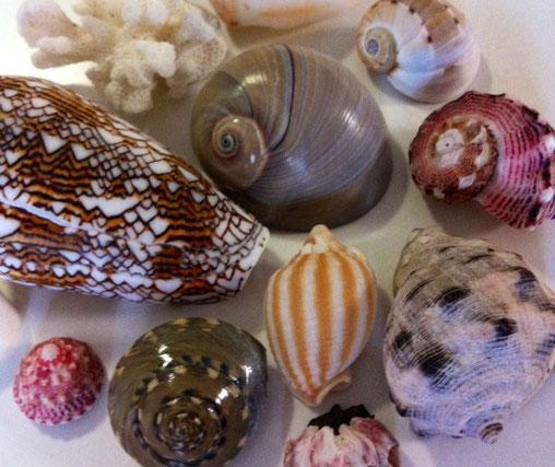 貝も完璧な物の形③で入れてたかと、。 これまた貝スゲ~w神さまスゲ~wな感じですね! 完璧です。