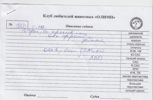 Лутший Юниор, Лутший Представитель  Породы CAC Jun .эксперт Гаврилова