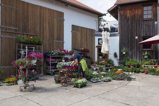 frische Blumen, Blumen Saison, Pflanzblumen, Schnittblumen, Blumenstrauß, Blumenladen, Bauernhof, Hofladen, Hof Holweg, Coppenbrügge, Hameln, Pyrmont, regional