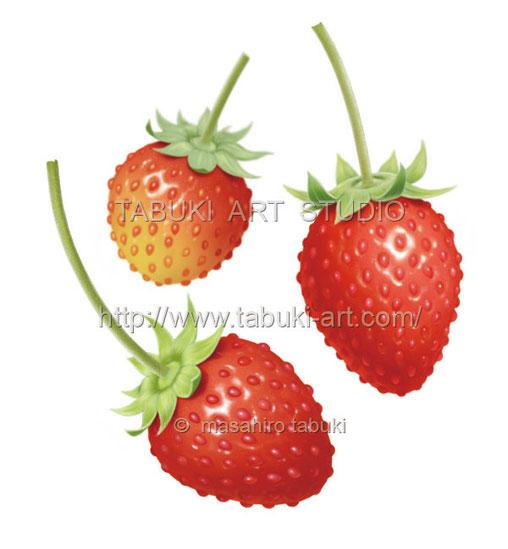 wildstrawberry イラスト