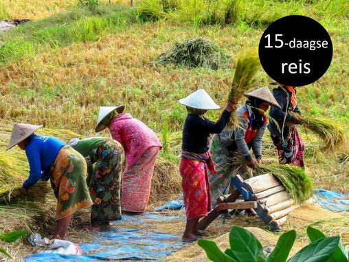 Hard werkende Lombok vrouwen
