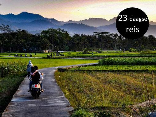 Weggetje tussen de groene rijstvelden in de buurt van de Borobudur tempel op midden Java