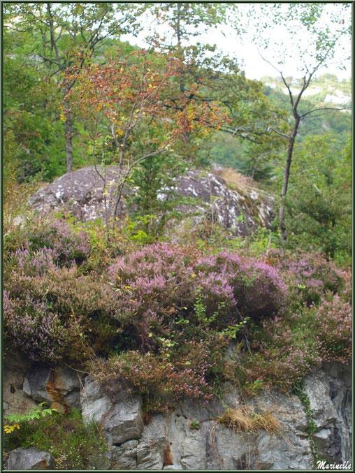 Végétation à flanc de montagne entre les Eaux-Chaudes et Gabas, Vallée d'Ossau (64)