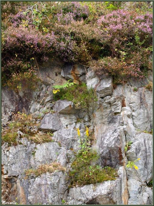 Végétation à flanc de montagne (Bruyère, Solidages...) entre les Eaux-Chaudes et Gabas, Vallée d'Ossau (64)