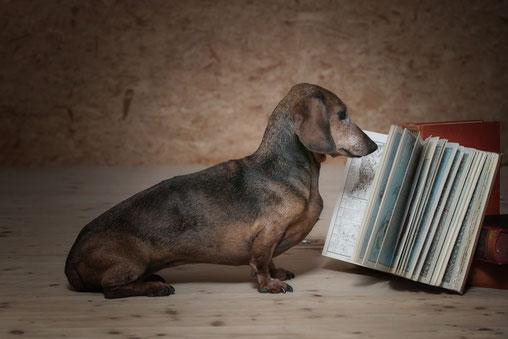 """Ob in diesem """"Katalog"""" auch Hundeträume in Erfüllung gehen?"""