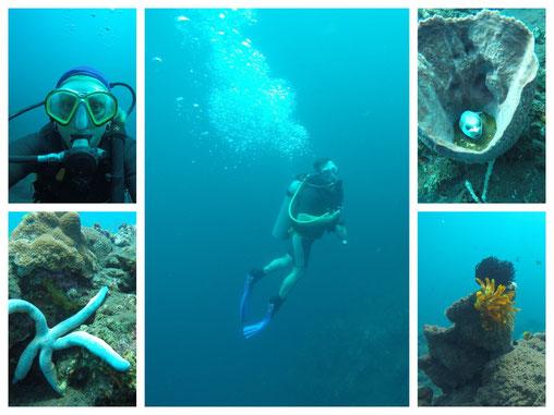 Paar Tauchgang erster Tauchgang Kofferfisch, Tischkoralle Seestern Bali Unterwasserwelt 2017 AlamBatu Tauchresort Tauchbasis