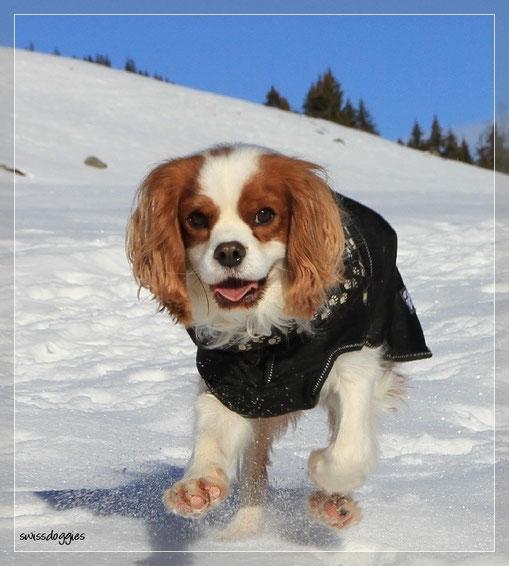 Aber auch Charly gibt Vollgas, was super geht, da der Schnee gefroren ist und er kaum einsinkt.