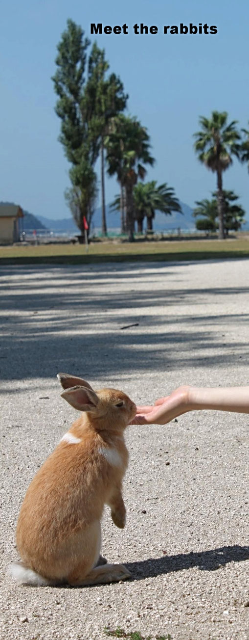Do you like rabbit? Source: Hiroshima prefecture
