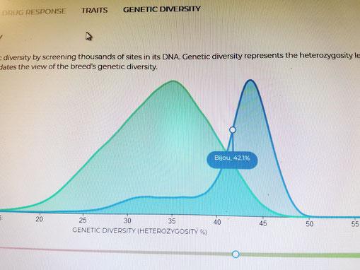 zur Grafik: blauer Berg: Wert Bijou, der grüne Berg ist der Durchschnitt aller Rassehunde. Der reinrassige Kromi wäre ein dritter Berg, links im Bereich von 25,5%.
