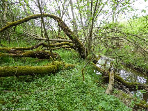 naturnaher Uferabschnitt der Wirft