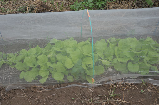 固定種 自然栽培 農業体験 体験農場 さとやま農学校