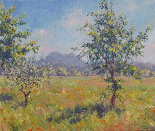 Le petit Béssillon au fond de la plaine de Tavernes en pleine été avec un jeune olivier et un jeune amandier en premier plan et des coquelicots éparce