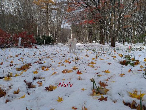 東北 紅葉と雪 スピリチュアルカウンセリング ヒーリング整体 自律神経