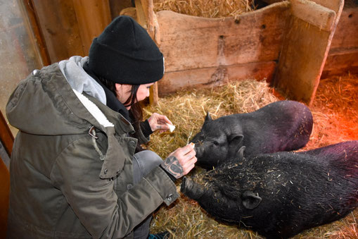Sandy P. Peng Tierschutz Schweine
