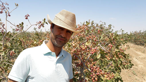 Pariz Nuts CEO Mostafa Dehshiri Parizi