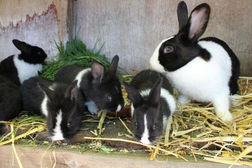 Unsere Söckchen mit ihren Jungen Max und Moritz