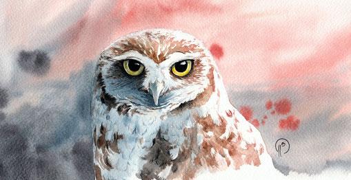chouette chevêche, aquarelle, illustration, nature, naturaliste, animalière, peinture, projet
