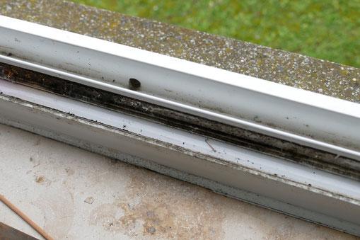 Am Rahmenprofil des Fenster lagen Schimmelpilzbildungen vor.