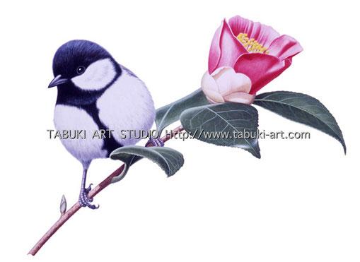 シジュウカラ 四十雀 野鳥イラスト 切り抜き カレンダー